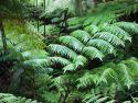 Plants by Thurston Lava Tube
